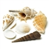 Decorative Natural Sea Shells